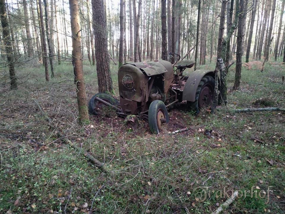 Eichi aus dem Wald